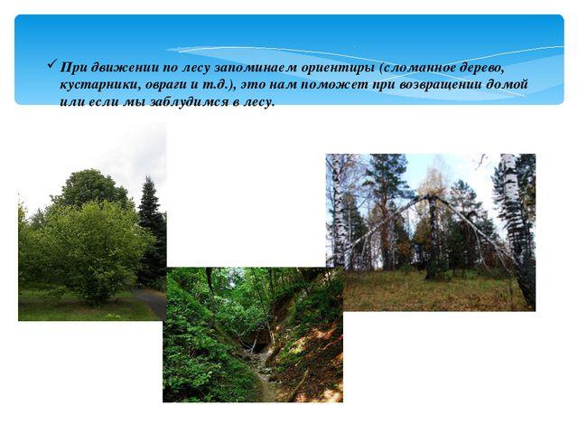 При движении по лесу запоминаем ориентиры (сломанное дерево, кустарники, овра...