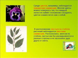 Среди цветов, например, наблюдается поворотная симметрия. Многие цветы можно