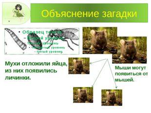 Объяснение загадки Мухи отложили яйца, из них появились личинки. Мыши могут п