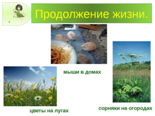 Продолжение жизни. сорняки на огородах цветы на лугах мыши в домах