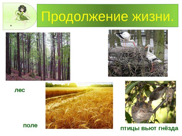 Продолжение жизни. лес поле птицы вьют гнёзда