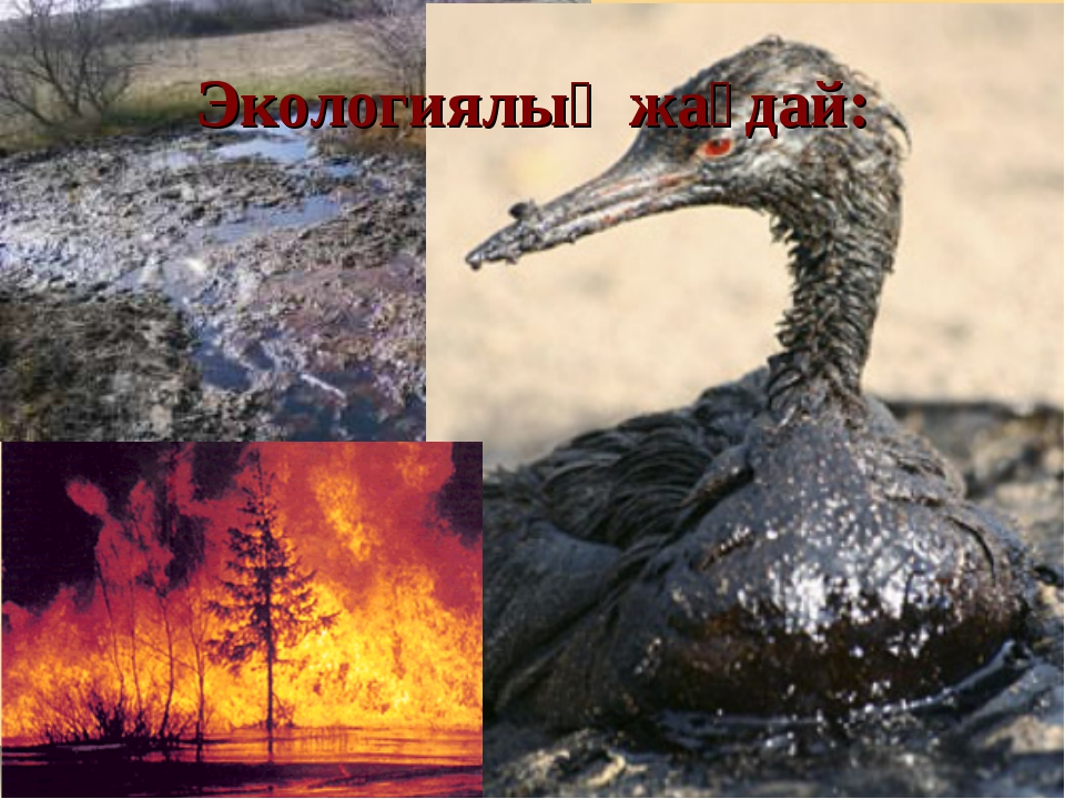 Экологиялық жағдай: