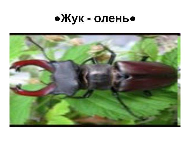 ●Жук - олень● Миляуша - null