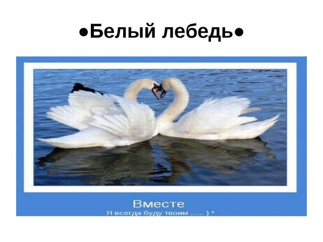 ●Белый лебедь●