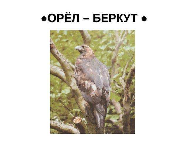 ●ОРЁЛ – БЕРКУТ ●