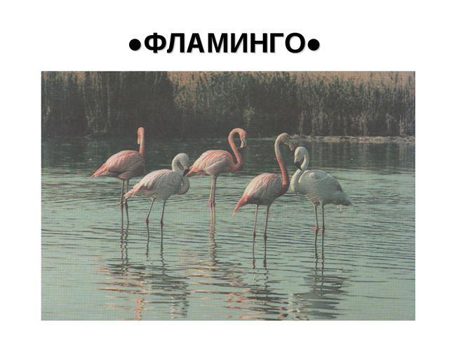 ●ФЛАМИНГО●