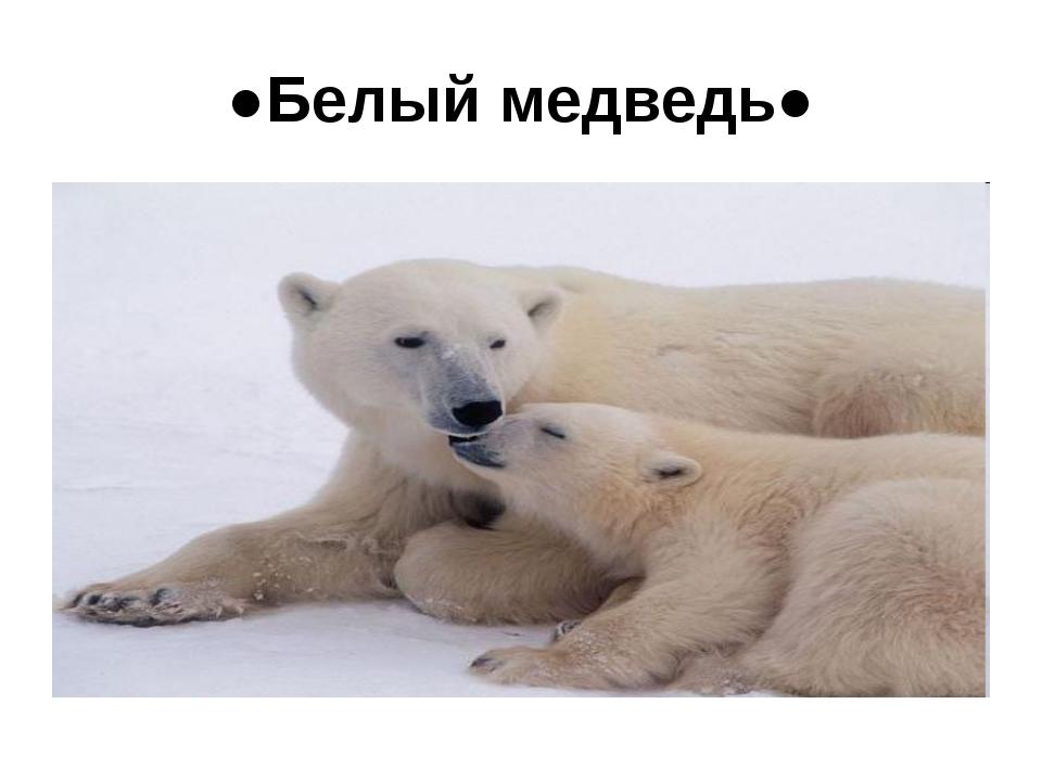 ●Белый медведь●