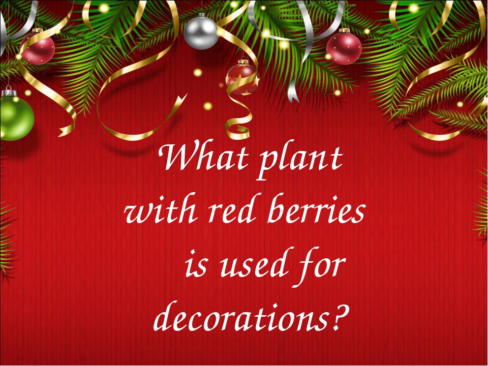 What plant with red berries is used for decorations?