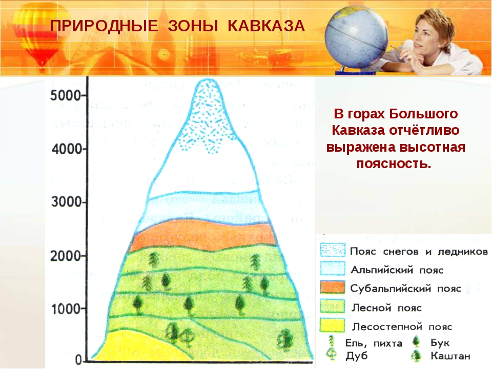 ПРИРОДНЫЕ ЗОНЫ КАВКАЗА В горах Большого Кавказа отчётливо выражена высотная п...