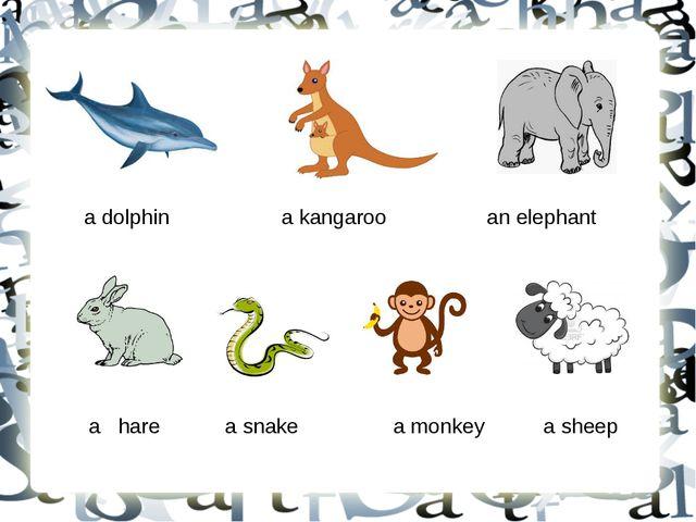 a dolphin a kangaroo an elephant a hare a snake a monkey a sheep