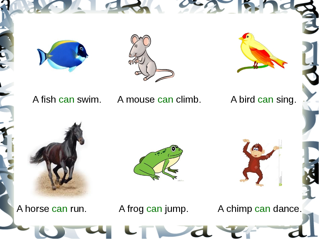 A fish can swim. A mouse can climb. A bird can sing. A horse can run. A frog...