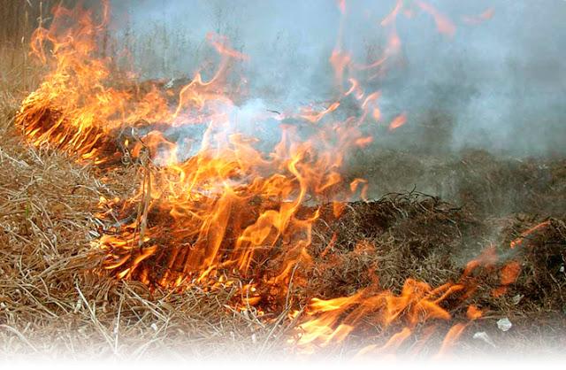 D:\Desktop\Сжигание травы и листвы.jpg