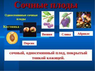Сочные плоды Односемянные сочные плоды Костянка - Персик Вишня Слива Абрикос