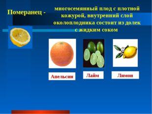 Померанец - многосемянный плод с плотной кожурой, внутренний слой околоплодни