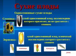 Сухие плоды Односемянные сухие плоды Семянка - сухой односемянный плод, около