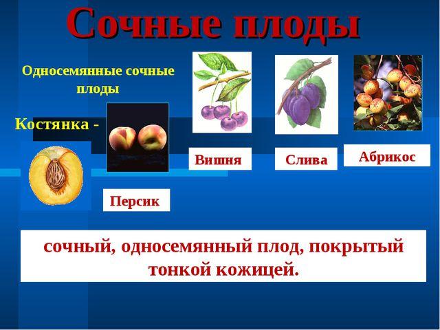 Сочные плоды Односемянные сочные плоды Костянка - Персик Вишня Слива Абрикос...