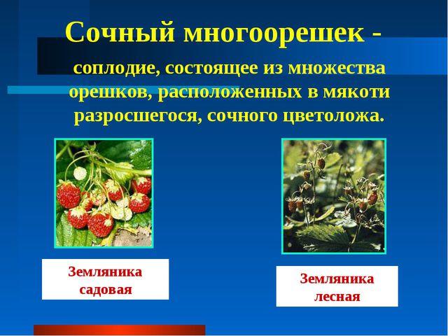 Сочный многоорешек - соплодие, состоящее из множества орешков, расположенных...