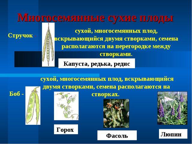Многосемянные сухие плоды Стручок - сухой, многосемянных плод, вскрывающийся...