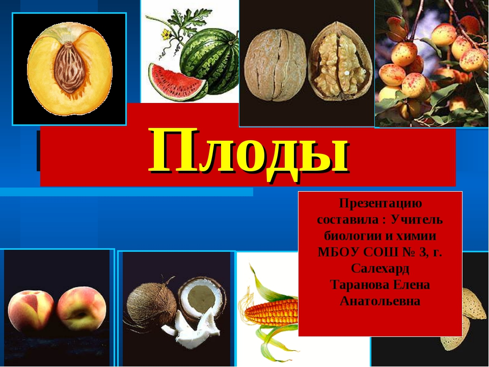 Плоды Презентацию составила : Учитель биологии и химии МБОУ СОШ № 3, г. Салех...