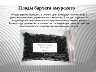 Плоды бархата окрашены в черный цвет, благодаря чему китайцы и дали ему назва