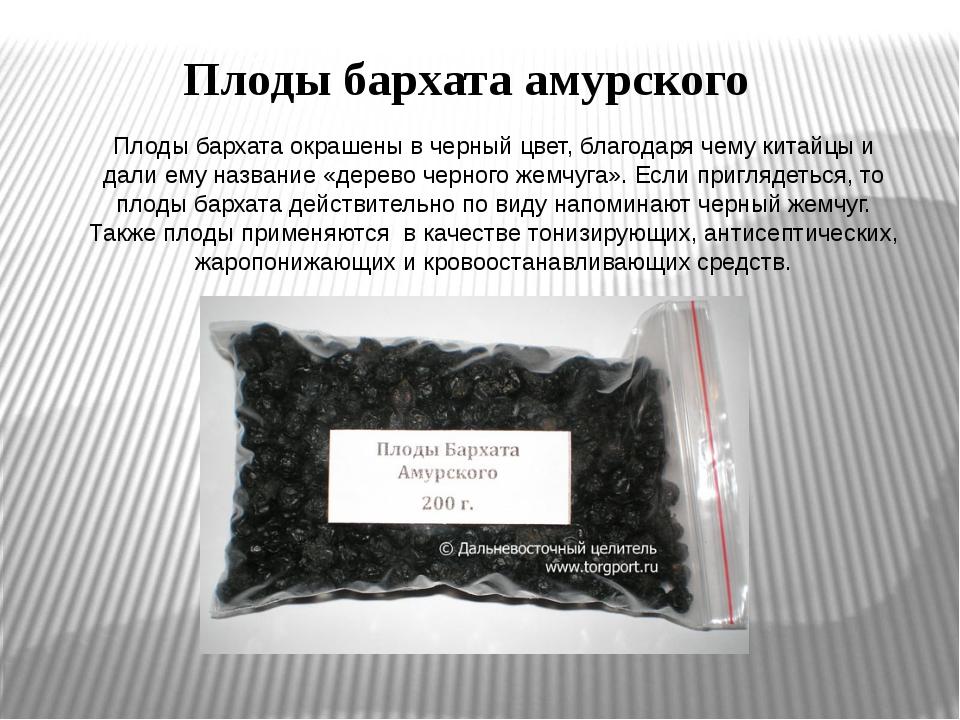 Плоды бархата окрашены в черный цвет, благодаря чему китайцы и дали ему назва...