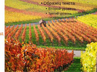 Осень. Созрел виноград.