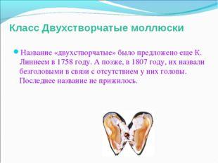 Класс Двухстворчатые моллюски Название «двухстворчатые» было предложено еще К