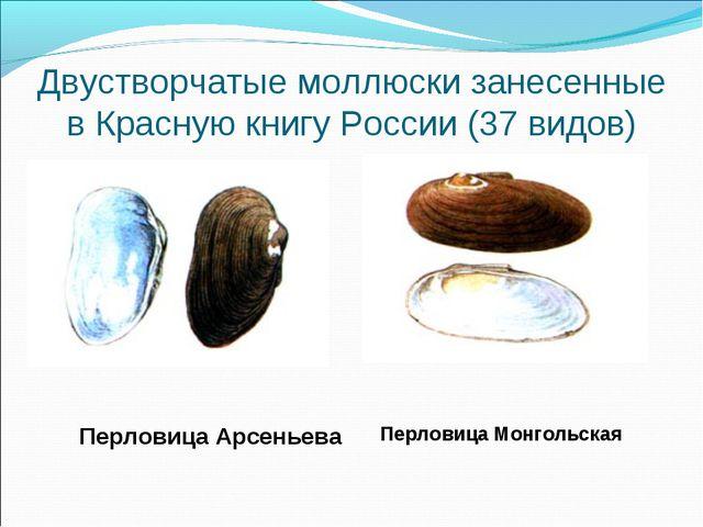 Двустворчатые моллюски занесенные в Красную книгу России (37 видов) Перловица...