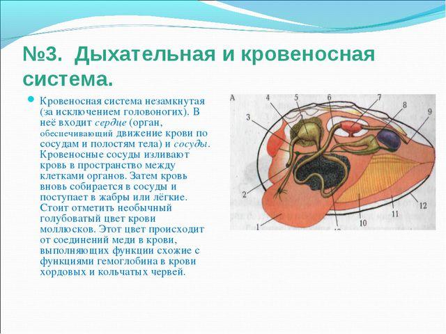 №3. Дыхательная и кровеносная система. Кровеносная система незамкнутая (за ис...