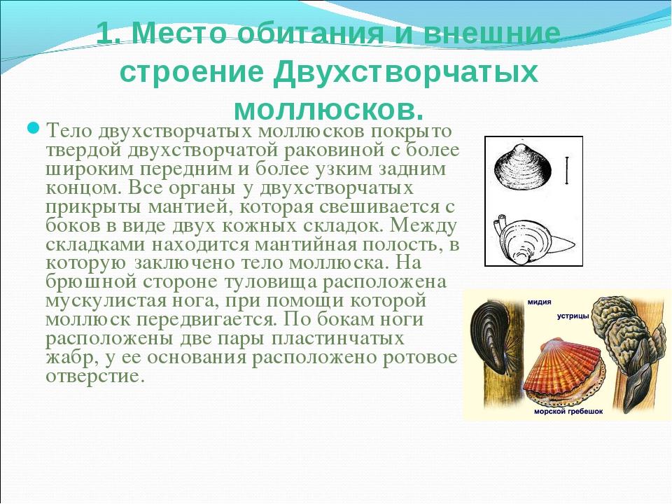 1. Место обитания и внешние строение Двухстворчатых моллюсков. Тело двухствор...