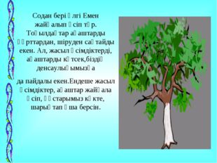 Содан бері әлгі Емен жайқалып өсіп тұр. Тоқылдақтар ағаштарды құрттардан, шір