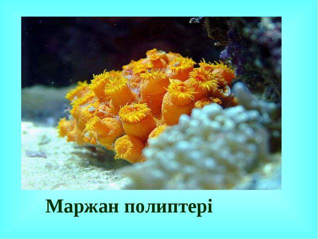 Маржан полиптері