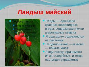 Ландыш майский Плоды — оранжево-красные шаровидные ягоды, содержащая почти ша