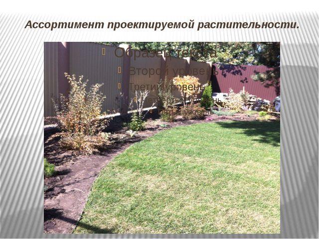 Ассортимент проектируемой растительности.