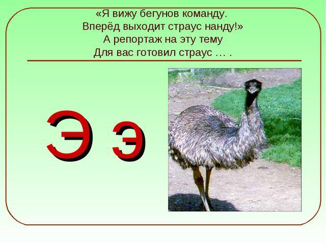 «Я вижу бегунов команду. Вперёд выходит страус нанду!» А репортаж на эту тему...
