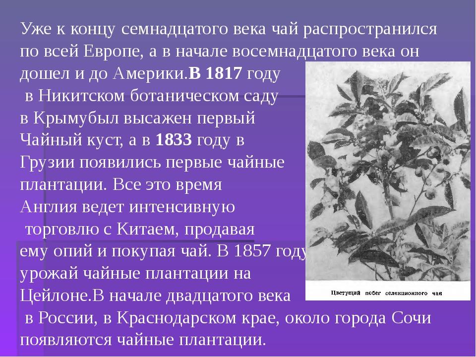 Уже к концу семнадцатого века чай распространился по всей Европе, а в начале...