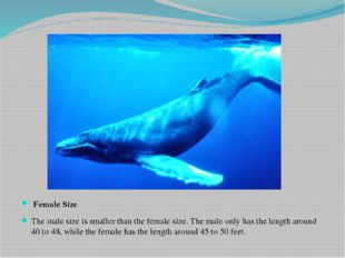 Female Size The male size is smaller than the female size. The male only has