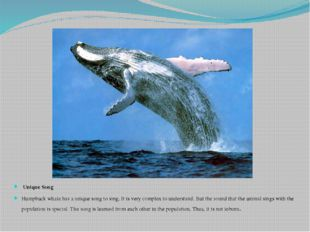 Unique Song Humpback whale has a unique song to sing. It is very complex to