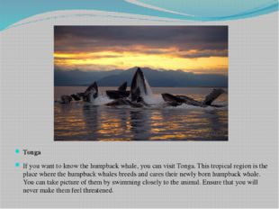 Tonga If you want to know the humpback whale, you can visit Tonga. This tropi