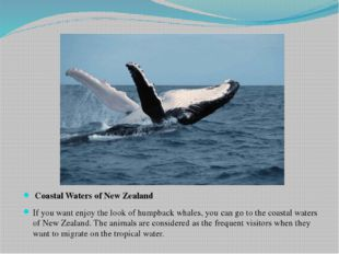 Coastal Waters of New Zealand If you want enjoy the look of humpback whales,