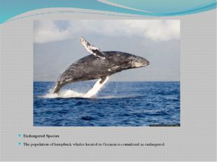 Endangered Species The population of humpback whales located in Oceania is co