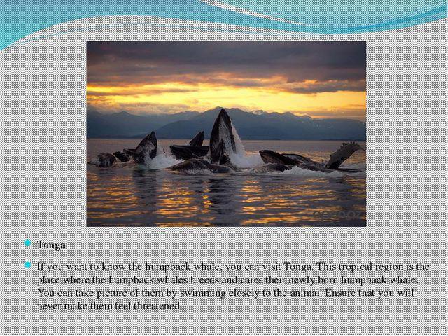 Tonga If you want to know the humpback whale, you can visit Tonga. This tropi...
