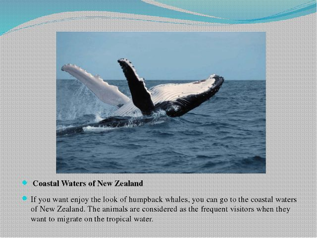 Coastal Waters of New Zealand If you want enjoy the look of humpback whales,...
