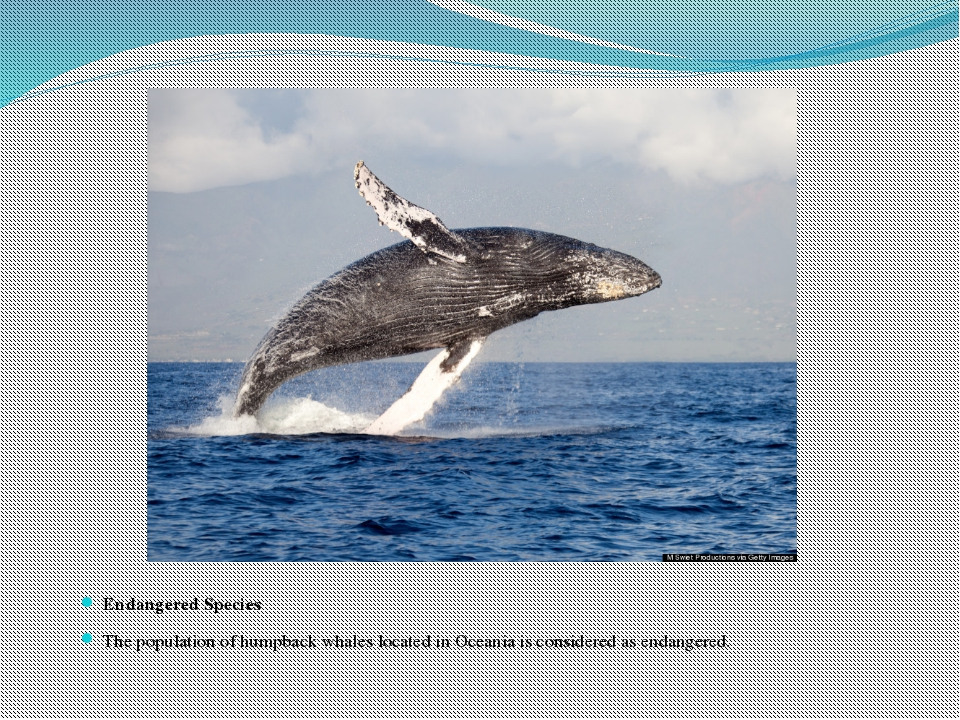Endangered Species The population of humpback whales located in Oceania is co...