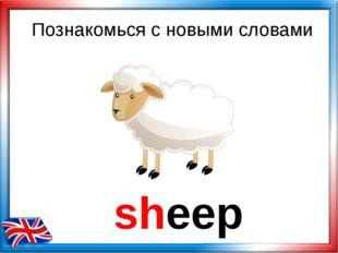 sheep Познакомься с новыми словами