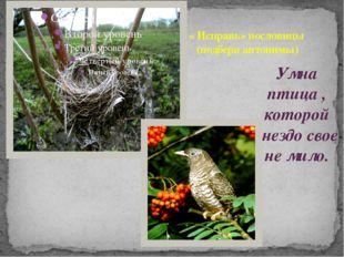 Умна птица , которой гнездо свое не мило. « Исправь» пословицы (подбери антон
