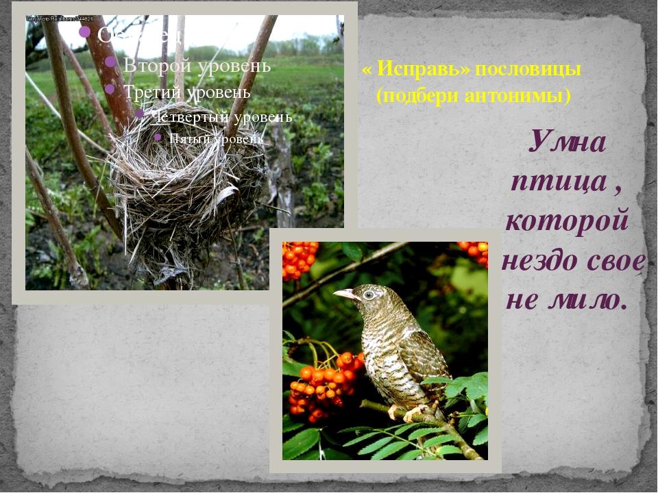 Умна птица , которой гнездо свое не мило. « Исправь» пословицы (подбери антон...