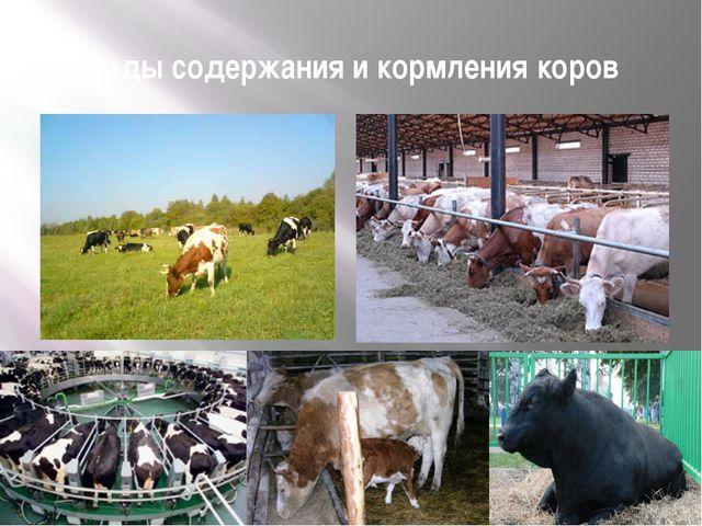 Виды содержания и кормления коров