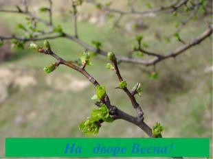 На дворе Весна!