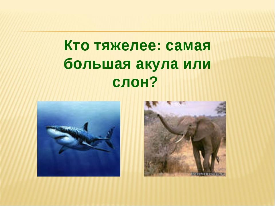 Кто тяжелее: самая большая акула или слон?